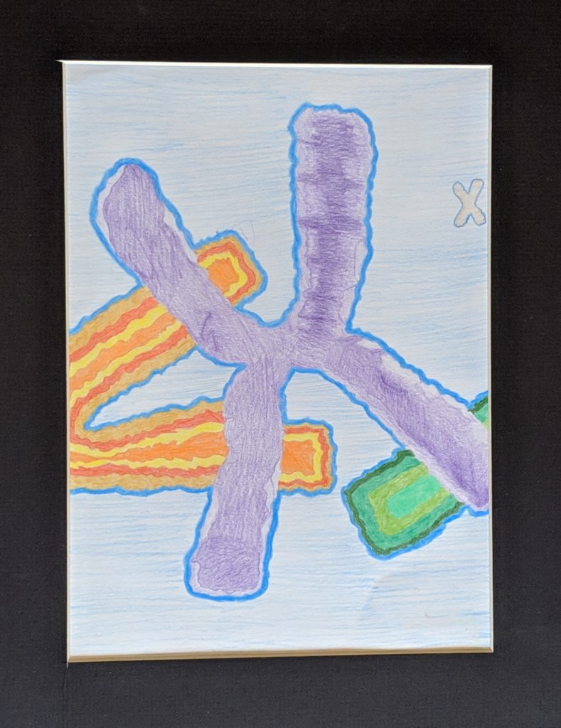 """X-chromosomes"" by Salina Lecleab"